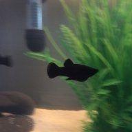 Fishmama6